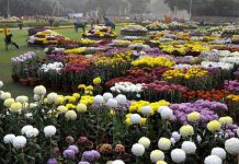 Chrysanthemum Show 2017